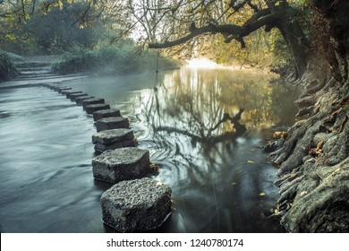 Stepping stone river crossing in tranquil forest
