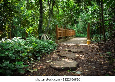 Stepping stones and a jungle bridge on the footpath in Bukit Timah, a nature reserve in Singapore