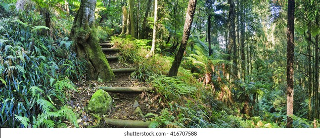 Steps of isolated tourist track down to cathedral creek of Mt Irvine in Blue Mountains, Australia. Green lush rainforest wet and humid on a sunny day.