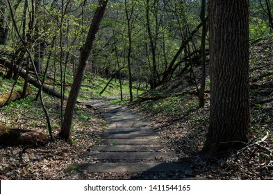 steps on winding trail through forested hills of flandrau state park in minnesota