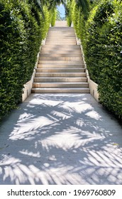Steps, stairs up in a tropical park. Shadows from palm trees in summer bright noon. Concept of travel, summer holiday, bright summer roast day and vacation