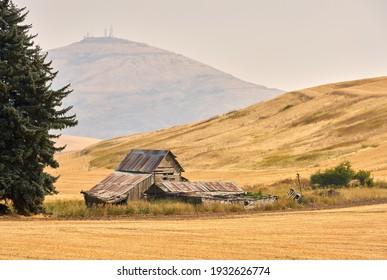 Steptoe Barn Washington State. An old, wooden barn in a field in front of Steptoe Butte.