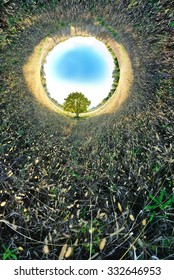 Stereographic panoramic projection of an autumn tree