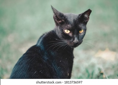 Sterilized stray cat. Cats that have undergone a sterilization process have their ears cut so that they can be recognized later. Pest control concept.