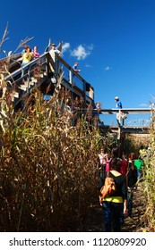 Sterling, MA - October 18 2008: People are playing corn maze in the Davis' Mega Maze.