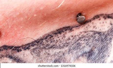 Sternum, body modifications, tattoos, microdermal colar style concept. Photo of surface piercing on collarbones with part of tattoo