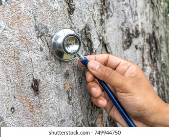 Stethoscope with tree surface background.