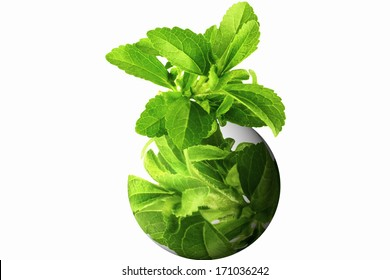 stevia herb on globe icon in white background
