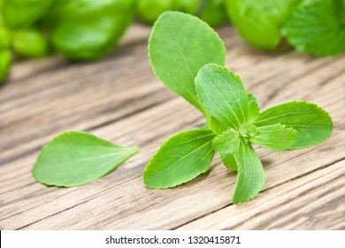 Stevia herbs  sweetener close up against wooden background