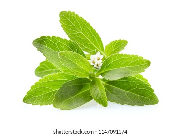 Stevia leaves on white background
