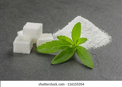 Stevia leaves with stevia powder and sugar cubes on a slate plate