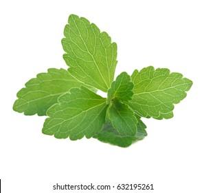 Stevia on a white background.