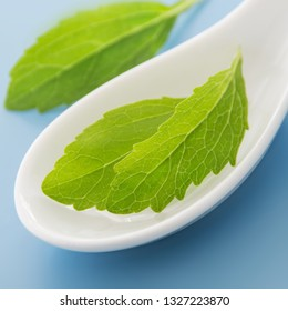 Stevia plant leaves and white spoon