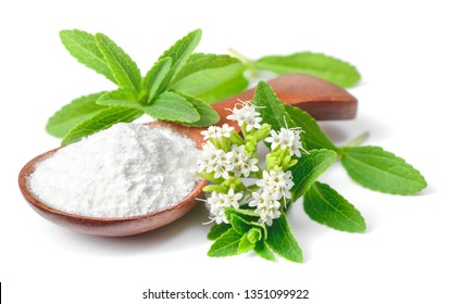 stevia sugar powder in the wooden spoon, with fresh stevia leaves and flowers, isolated on white background