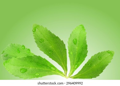 stevia sugar substitute herbs leaves in green background