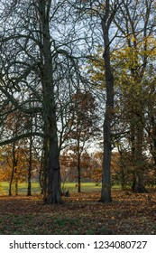 Stewart Park in Middlesbrough. The colours of November.