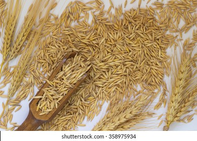 A stick of barley and wheat. Oat grains scattered on the table
