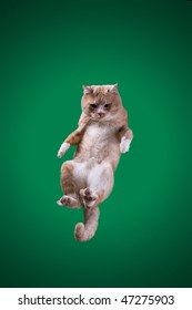 The stick Cat that flying on green background. Cat on chromakey background. Red hair cat. Cat jumping.