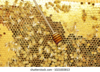 stick with honey on a honeycomb with bees