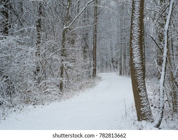 Sticking snow covering trees and winter trail
