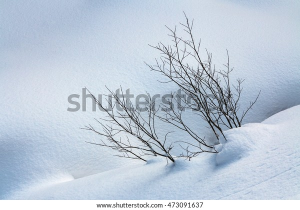 Sticking treetops of pristine blanket of snow. Sticking out the tops of the trees of the virgin blanket of snow.