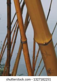Sticks of Bambu