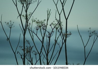 sticks and twigs against a soft blue grey background