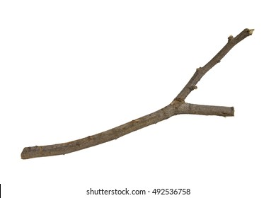 Sticks and twigs isolated on white background
