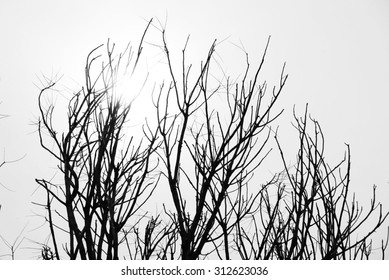 Sticks and twigs on sky background. Selective focus