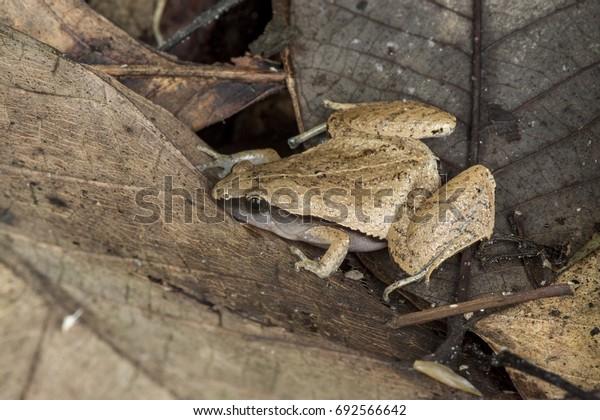 Sticky frogs