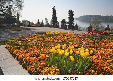 Stiefmuetterchen, Tulpen, Blumenfeld, Insel Mainau, Island, Pansy, Tulips, flowerfield