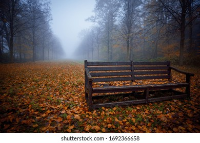A still bench in the dense fog of the park clemenswerth.