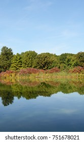 Still lake reflects surrounding trees and marginal plants with clear blue sky