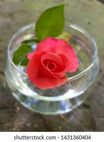 Still Life Art in the Photo: pink rose flower in a round transparent glass vase with water on a sheet of tin