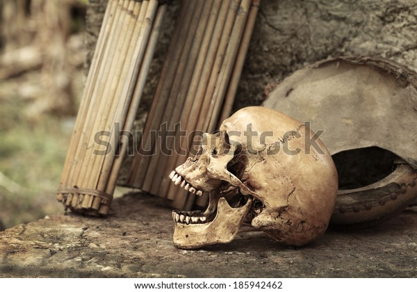 Still life art photography on skull and old musical instruments black and white version