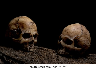 Still life awesome couple human skulls on the timber over darkness background