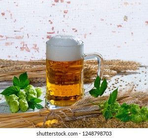 Still life with beer galss, hops and barley