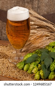 Still life with beer glass, hops and barley