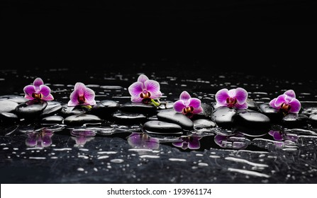 still life with black stone and pink orchid