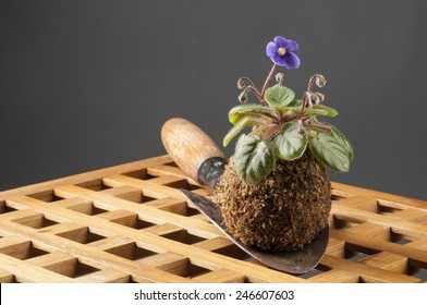 Still life with blooming violet and garden shovel over grey background
