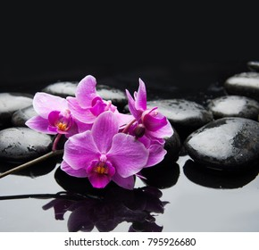 still life with branch pink orchid and black stones