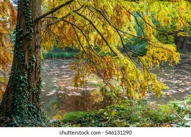 Still life and calm place near water at autumn with golden leafs in Bratislava park