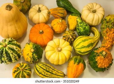 Still life with colorful decorative mini pumpkins