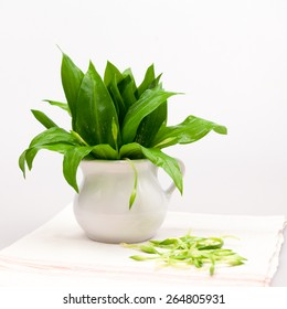 Still life composition with bear's garlic (Alium Ursinum) leaves and buds