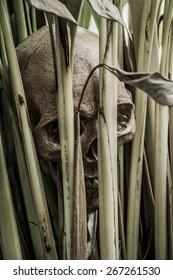 still life cranium