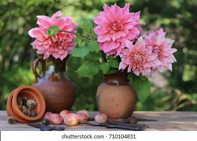 Still life with dahlia in vintage clay pitcher, cones in ceramic flower pot, plums on aged table on fence background, garden scene, real vertical photo, daylight