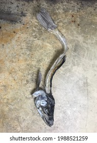 Vie morte d'une carcasse de poisson morte échouée sur la plage, photographiée sur fond texturé