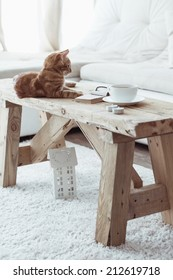Still life details, cup of coffee on rustic bench and a cat lying down on it in white cottage room