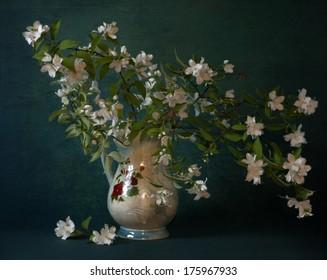 still life with flowers of jasmine
