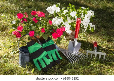 still life with flowers, watering pot, shovel and rake in a garden